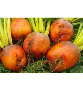 Свекла оранжевая, 1 кг