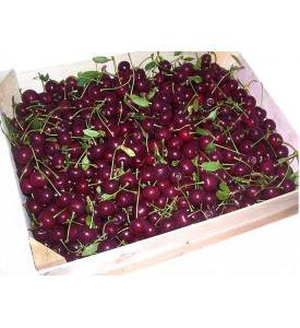 Вишня, ящик 7 кг, Армения
