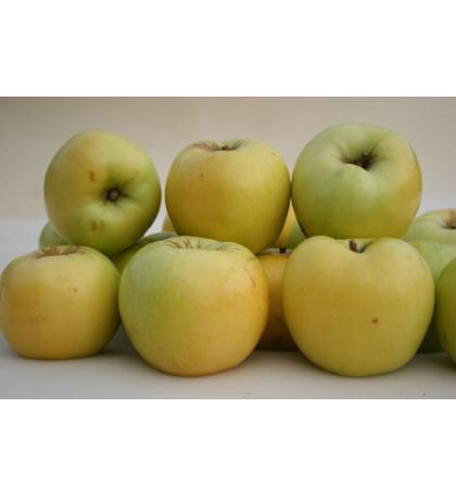 Яблоки антоновка, 1 кг, Россия