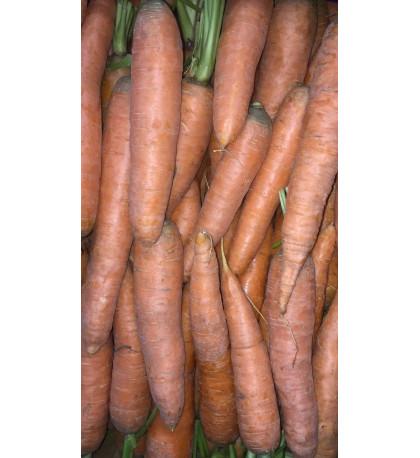 Морковь молодая, 1кг Россия
