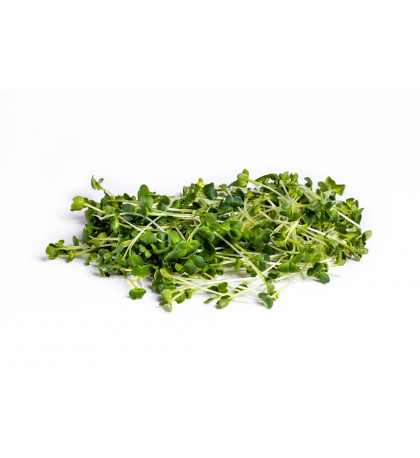 Микрозелень базилик 100 г