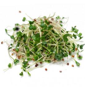 Проростки брокколи калабрийская, 30 г