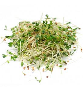 Проростки люцерна салат, 50 г