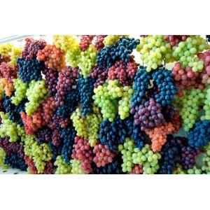 Сезон винограда