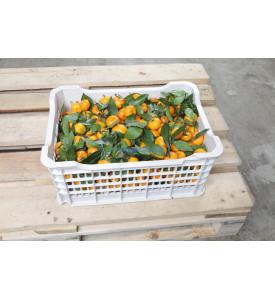 Ящик мини мандаринов с листом, 6,5 кг