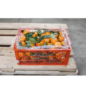 Ящик мандаринов с листом, 9 кг