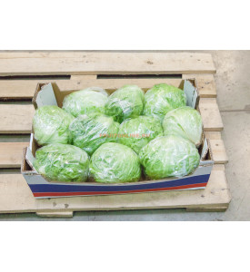 Упаковка салата айсберг, 5 кг