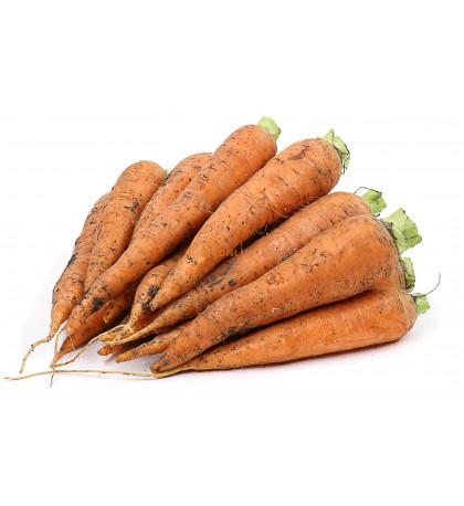 Морковь молодая, 1 кг