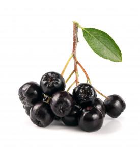 Рябина черноплодная свежая
