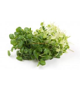 Кресс салат, 1 кг