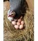 Яйца цесарки, десяток, Калужская область